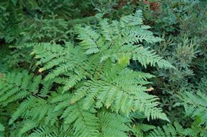 This Bracken Fern Is An Example Of Autotroph